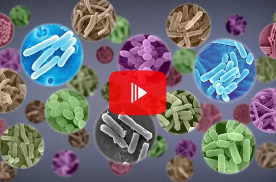 乳酸菌の新たな可能性  [再生時間:7分29秒]