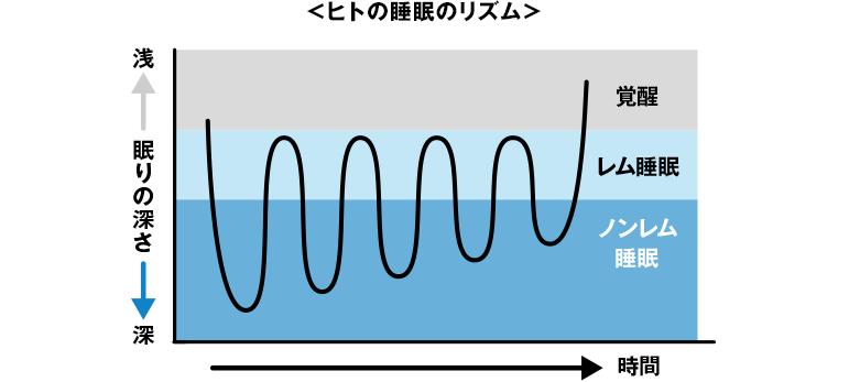 ヒトの睡眠のリズム