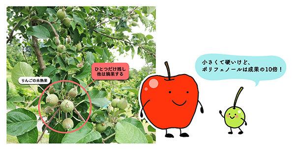 図1 りんごの未熟果
