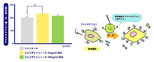 図5 りんごポリフェノールのプロテオグリカン産生促進効果