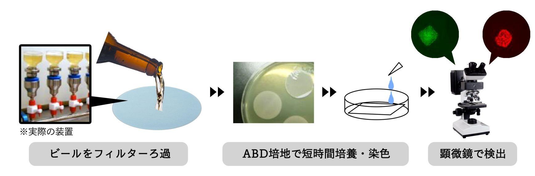 ビール混濁性微生物の迅速な検出方法