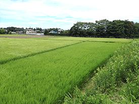 酵母細胞壁の農業資材を通じた農業分野の社会的解題解決